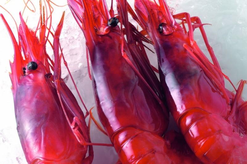 西班牙最好吃的红虾 camba de palamos